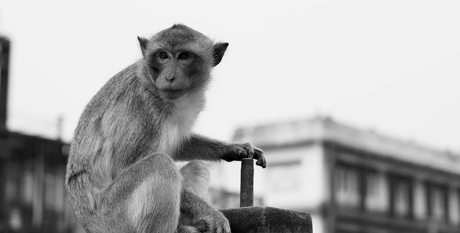 A Day in Monkey Town | ArtSocket Gallery Magazine